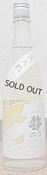 画像1: 勢正宗 純米酒 YELLOW CARP 瓶燗火入れ 720ml or 1800ml 30BY (1)